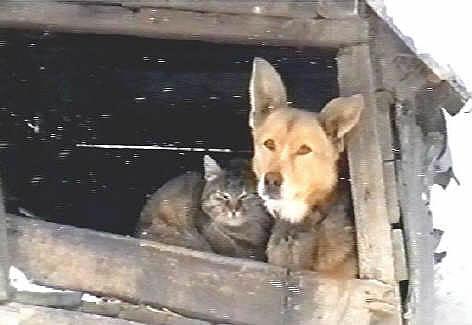 H5N1 bei Katzen